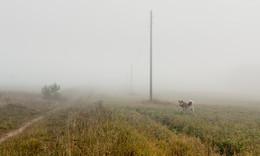 Туманы в сентябре... / природа Вологодчины...