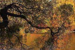 ФотоГрафика Осени. / Природа.