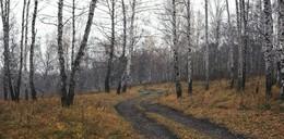 Холодный лес. / ***