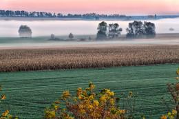 Осенний туман / Осенний туман, дорога, восход солнца.