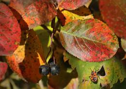 Флора и фауна октября... / Теплый октябрь в Москве...