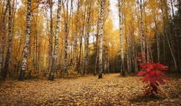Осенний блюз / Краски осени