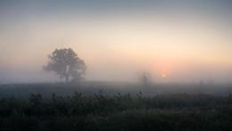 Туманным утром / Осенний рассвет