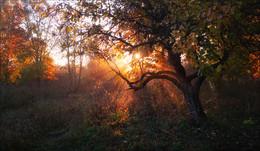 Октябрьское солнце / Пейзаж Беларуси