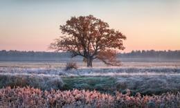 В свете утра / Морозный рассвет
