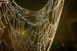 Ожерелье. / паутина в росе