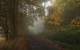 Дорога в осень / Осеннее утро . Зарисовка .