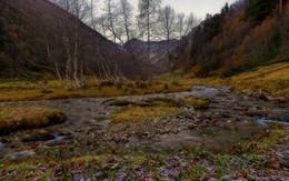 Хоровод берёзок ранним холодным утром у реки / Осень , раннее утро