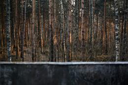Без названия / Осенний лес