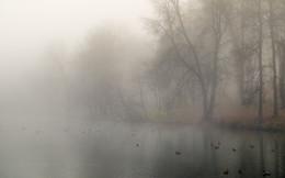 Неперелетные птицы / Ноябрьские туманы.