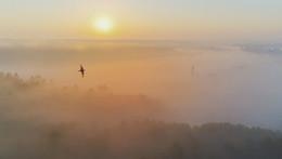 В полете / Туманное утро. Высота 65 метров. Фото с дрона.