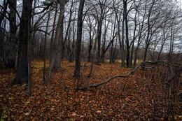 На исходе осени / 18 ноября. В это время уже обычно лежал снег.  Но в этом году бесснежная нагая и достаточно теплая осень