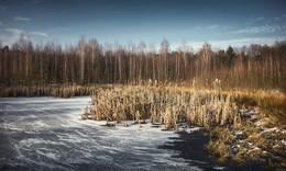 Замерзающий пруд / Поздняя осень