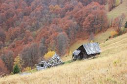 Осень в Карпатах / Закарпатская область. Покинутая стаенка.