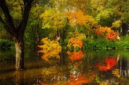 Осенняя акварель / ***