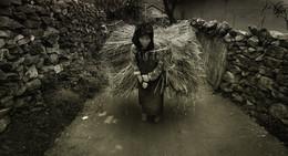Женщины Вьетнама / Во время фототура по Вьетнаму меня поразило более всего то, что на рисовых террасах по- прежнему много ручного труда. Большинство- это женщины. Женщины выполняют тяжелый ручной труд. На рисовые плантации на работу они приходят вместе с детьми. Маленькие дети находятся прямо за спиной своих матерей, пока те выполняют тяжелую работу. То, что уборка риса- это тяжелый труд с последствиями показывает тот факт, что мужчины и женщины со временем уже не могут разогнуть свои спины. Они продолжают жить в повседневной жизни с согнутой спиной…Так ходят, кушают, отдыхают, и так ложатся спать. Меня восхищает в этих людях трудолюбие, их руки и ноги напоминают сухие корни деревьев. Однако их глаза светятся добродушием, они не смотрят на тебя не с завистью или презрением. Я чувствовал как я погружаюсь в глубину и тишину, когда смотрел в глаза вьетнамских людей, работающих на рисовых террасах. Мое сердце сжималось от сострадания и одновременно от радости за этих людей. Я видел, что они счастливы Основная часть фототчета...  https://mikhaliuk.com/Rice-terraces-and-the-people-of-Vietnam