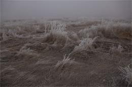 Без названия / трава