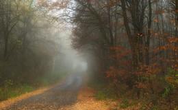 У нас еще осень ! / Вчерашнее туманное утро . И прекрасная погода днем . Зарисовка .