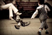 голуби / _________б\к