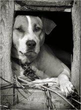 Без названия / dog's  life