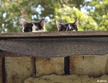 ну что, прыгаем? / котята на крыше