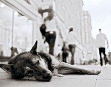Пол часа на сон / Сейчас он спит, но ровно через десять минут он проснётся и отправиться в Берлин.