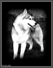 Husky / Husky