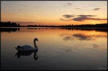 Лебедь. Озеро. Закат. / Лебедь не вфотошоплен!