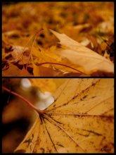 листья падают...шуршат... / .....