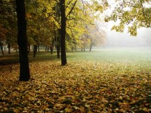 Осеннее дыхание / Утро, туман, свежесть....