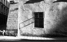 Сабачатина :) / street photo from Lwow