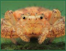 Портрет паука / Встретил паука с такой забавной физиономией-кажется,улыбается через силу,потому что рот зашили