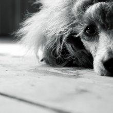 ...иногда бывает грустно... / .....