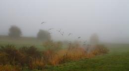 Утки улетели... / Утренние осенние туманы и утки которых я потревожил . Этюд.