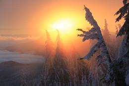 Руки зимы уже дотянулись до Карпат / Хребет Кукул, полонынка Лабьеска.