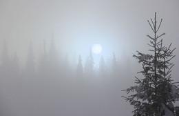 Полдень / Туманным днем на минутку показалось солнце, выхватив из пелены заснеженные ели. Осень, Карпаты.