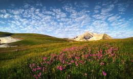 Горы, цветы, облака... и снег / Лето в горах