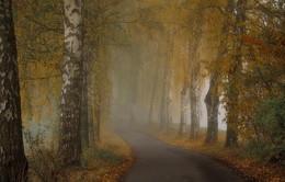 Краски осени / Когда наступает осень и опускается туман , природа наряжается своей красотой . Зарисовка .