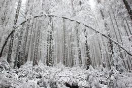 Зимняя арка / Карпаты, ноябрь 2018