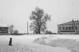 Заснеженная пятница / Усолье снег собака автобус