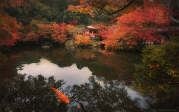 Момидзи Японии. / Япония . Осень 2018. Храм Дайго-дзи. https://mikhaliuk.com/Japan-Phototour-Fuji-Sakura-flowering/