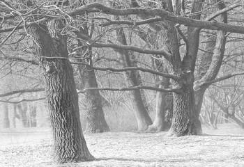 Поздняя осень... / А в декабре уже легкий снежок...