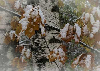 Снежный этюд... / Это было еще в ноябре...