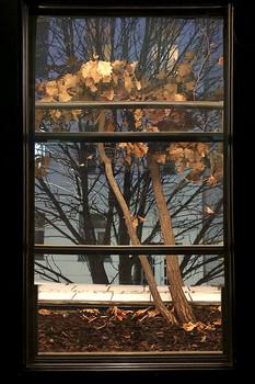 В окне / ...