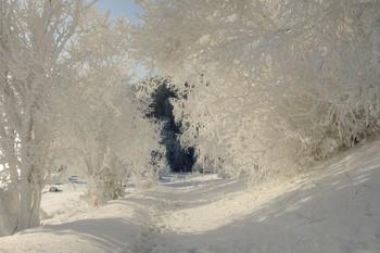 Зимнее кружево. / Иней в мороз на деревьях у парящего Енисея.