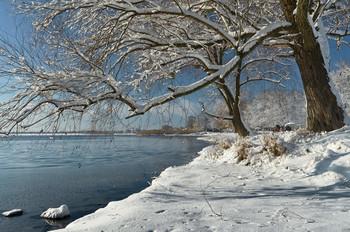 Зимняя зарисовка / Январский день у озера Лиман Харьковская область.