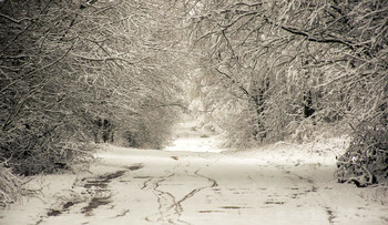 Зимняя зарисовка / Снежная зима
