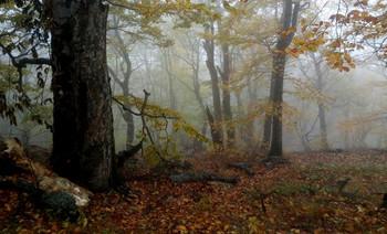 Тропами горными.... / Железноводск. Октябрь