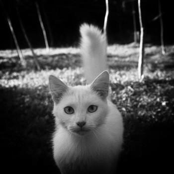 Морда белой кошки в Озерках / Морда белой кошки в Озерках