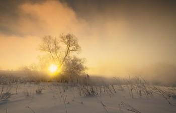 Золото морозного утра / Зимние туманы.